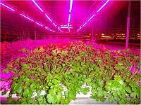 Выбираем лампу для растений