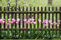 Квітники вздовж паркану