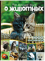 Книга Моя большая книга о детенышах животных Энциклопедия для детей. Издательство Махаон (Machon)