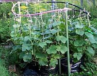 Огурцы в мешках: секреты хорошего урожая