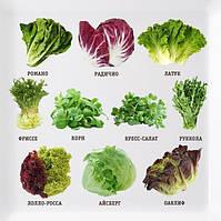 Поговоримо про салатах! Про властивості, смак і не тільки...