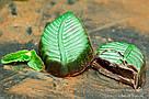 """Шоколадные конфеты ручной работы """"Мятные листочки"""", 1 шт, 20 г., фото 3"""