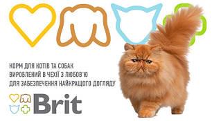 Корма для котов и кошек
