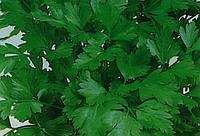 Петрушка листовая Балконная 4,0 г
