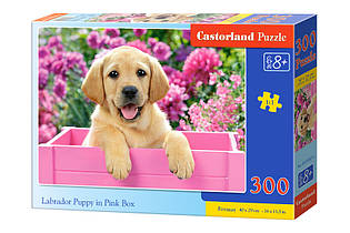 "Пазлы 300 ""Щенок лабрадора в розовой коробке"""