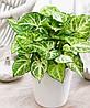 Циркон: инструкция по применению для комнатных растений