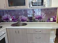 Кухонный фартук из стекла цветы фиолетовой диморфотеки
