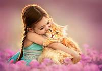 Пазлы Castorland Рыжий котенок 52370, 500 элементов