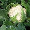 Семена капусты цветной Немо F1 (1000 c)