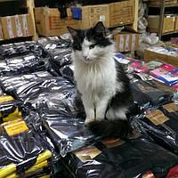 Это наша Каролина и она принимает активное участие в обработке Ваших заказов :)