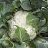 Семена капусты цветной Каспер F1 (2500 с)