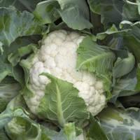 Семена капусты цветной Каспер F1 (2500 с), фото 1