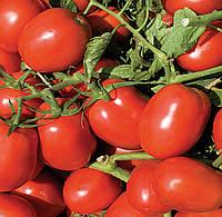 Семена томата Дельфо F1. Упаковка 5 000 семян. Производитель Bayer Nunhems