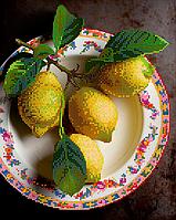 Схема для вышивки бисером Лимонный натюрморт, размер 24х30 см
