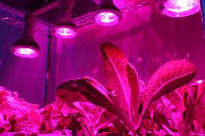 Лампа для растений 12*1W E27, красно-синий спектр, фото 3