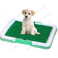 Туалет для собак, щенков с травой