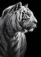 """Схема для вышивки бисером """"Белый тигр"""", А3"""