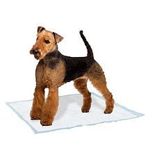 Пеленки и трусы для собак