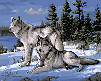 Раскраска по цифрам 40×50 см. Волки на снегу Художник Джозеф Хаутман, фото 1