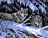 Набор для рисования 40×50 см. Волки в лесу Художник Розмари Миллетт