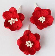 Цветы вишни красные (3), фото 1