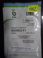 Семена капусты Бронко F1 (Бейо / Bejo) 2500 семян — средняя (80 дней), белокочанная.