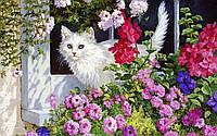 """Картина-раскраска """"Белая кошка Худ Персис Клейтон Вейерс """""""