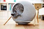 Мебель для кошек как предмет интерьера