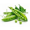 ТИАРА - семена гороха овощного, 100 000 семян, Lark Seed