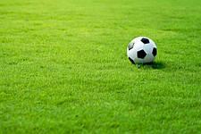Как подобрать газонные травы и смеси.