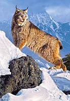 Пазлы  Рысь в горах, 1000 элементов Castorland С-103560