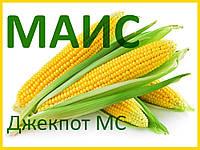Семена кукурузы Джекпот МС (МАИС)