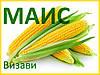 Семена кукурузы Визави (МАИС)