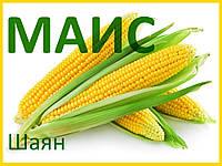 Семена кукурузы Шаян (МАИС)