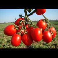 Семена томата Тенорио F1. Упаковка 5 000 семян. Производитель Clause