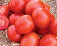 Семена томата Стелла Ред F1. Упаковка 5 000 семян. Производитель Claus