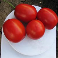 Семена томата Литтано F1. Упаковка 5 000 семян. Производитель Clause