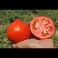 Семена томата Каста (Супернова) F1. Упаковка 5 000 семян. Производитель Clause