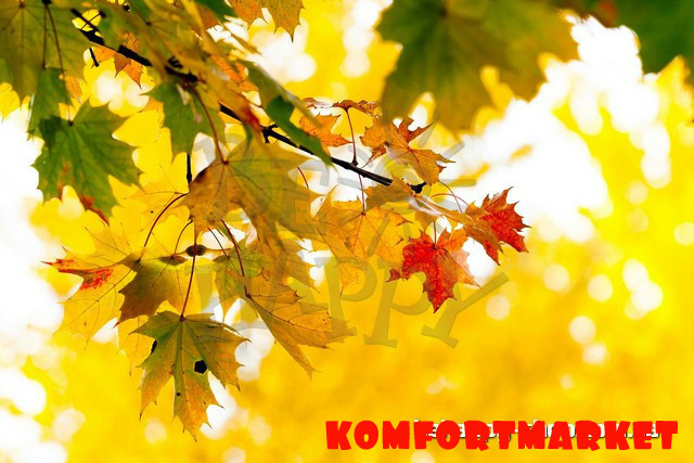 """Фотообои: """"Осенние листья"""""""