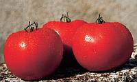 Семена томата Альянс F1. Упаковка 250 семян. Производитель Clause