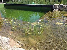 Эко-бассейны, биопруды, экопруды