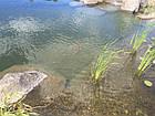 Пруды для карпов Кои, водоемы для рыбы, фото 2