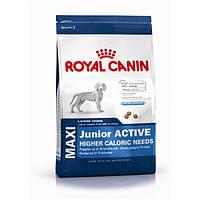Royal Canin Maxi Junior Active/Роял Канин для активных щенков крупных пород до 15мес.