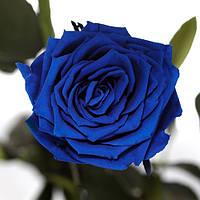 Долгосвежая роза FLORICH без подарочной упаковки (от 5 шт.)  - СИНИЙ САПФИР (7 карат на коротком стебле)