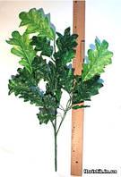 Ветка дуба, зеленый лист