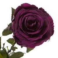 Florich Букет долгосвежих роз Фиолетовый аметист (5 карат на коротком стебле) Florich