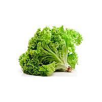 ГИОВЕ F1 – насіння салату тип Тревізо, 5 000 насінин, Enza Zaden