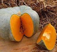САМПСОН F1 - насіння гарбуза, 500 насіння, Enza Zaden