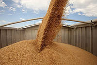 Египет упростил правила импорта зерна