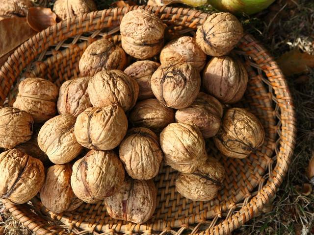 Урожай орехов в Украине сократится на 40%